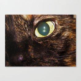 Side Glance Canvas Print