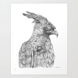 Eagle, long crested eagle Art Print