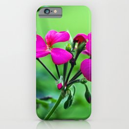 PINK Blossoms before GREEN iPhone Case