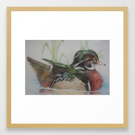 Wood duck Framed Art Print
