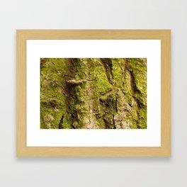 Autumn Bark #2 Framed Art Print