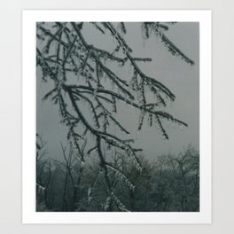 Trees encased in ice Art Print