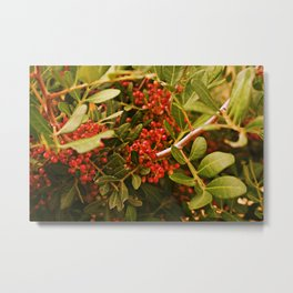 Be very berry Metal Print