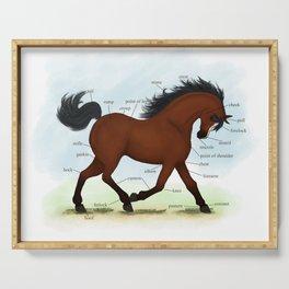 Bay Pony with Blaze Horse Anatomy Chart Serving Tray