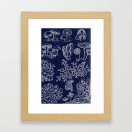 Fungus And Lichen Chart Framed Art Print