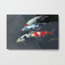 Swimming Koi Metal Print