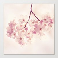 cherry blossoms Canvas Prints featuring cherry blossoms by Sylvia Cook Photography