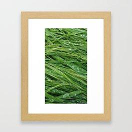 Rainy Daze Framed Art Print