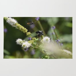 Extra Extra!! Scolia dubia a.k.a The Blue Winged Wasp Returns With Back up! Rug