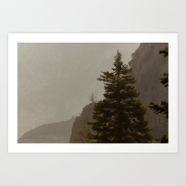 Skeletal Tree Rock Canyon Utah Mountain Landscape Art Print