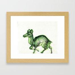 Dik-dik  Framed Art Print