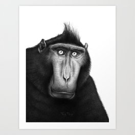 Crested macaque Art Print