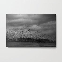 Birds Metal Print