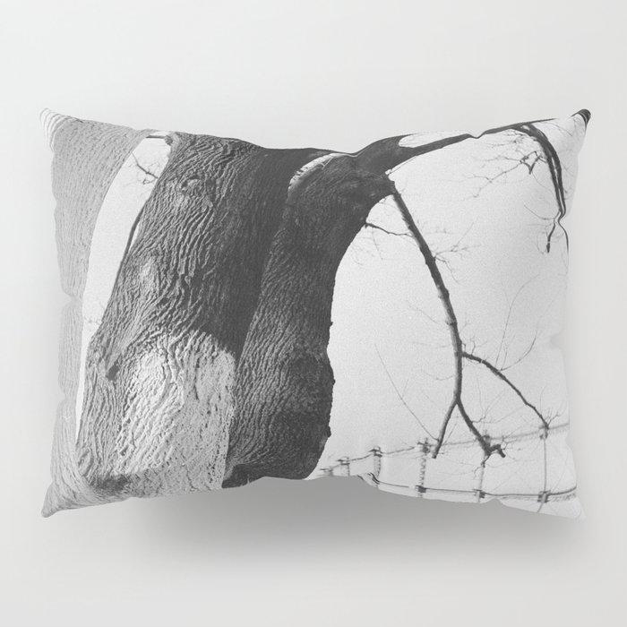 Thursday, 14th January 2016 Pillow Sham