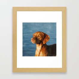 Vizsla dog - Hungarian hound Framed Art Print