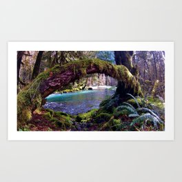 Colors of the Quinault Art Print