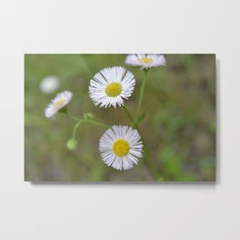 Now I'm Your Daisy Metal Print