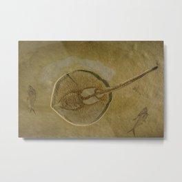 Flat Fish Fossil Metal Print