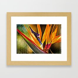 Bird Talk - Bird Of Paradise By Sharon Cummings Framed Art Print