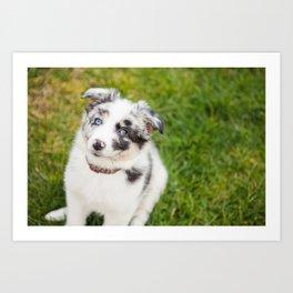 puppy Ben Art Print