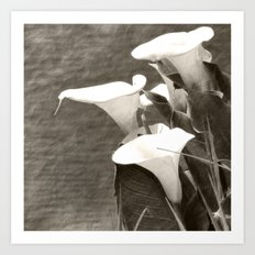 Calla Lily Flower Sepia Photo Art Print