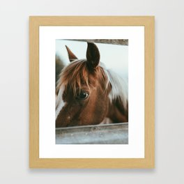 crystal the pony Framed Art Print
