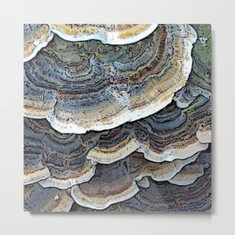 Turkey Tail Fungi Metal Print