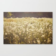 Spinning daisies Canvas Print