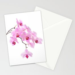 Pink orchid, closeup shot, white background Stationery Cards