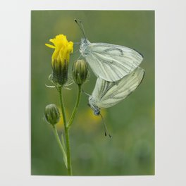 Butterfly Love Poster