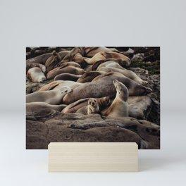Baby Sea Lion Photograph Mini Art Print