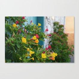 Mediterranean Bouquet (Lania, Cyprus) Canvas Print