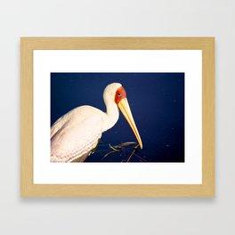 Yellow-Billed Stork Framed Art Print