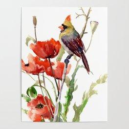 Cardinal Bird And Poppy Flowers Poster
