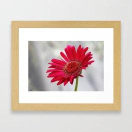 Pink on Gray  Framed Art Print