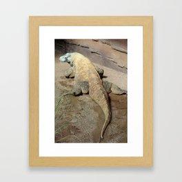 Lizard Framed Art Print