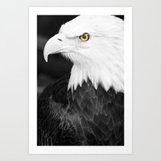 Bald Eagle with Yellow Eye Art Print