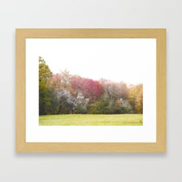 Colorful Flowering Spring Trees Framed Art Print