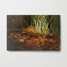 Macro close up forest life spying Metal Print