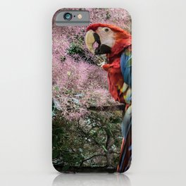 Red macaw parrot ara iPhone Case