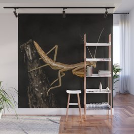 Praying Mantis Isolated on Black Wall Mural