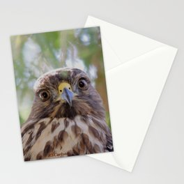 Hawk Eyes in the Willow Stationery Cards