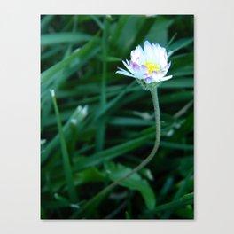 Music Concourse Flower Canvas Print
