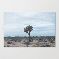Joshua Tree II Canvas Print