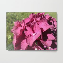 Intense Flowers Metal Print