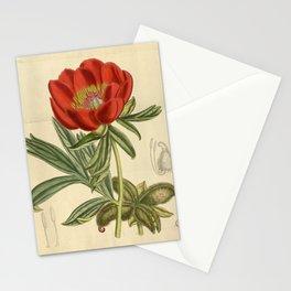 Paeonia peregrina, Paeoniaceae Stationery Cards