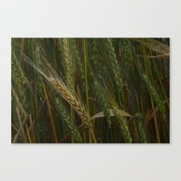 Waving Wheat Canvas Print