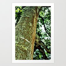 Lookingup Art Print