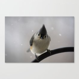 Snowy Tufted Titmouse Canvas Print