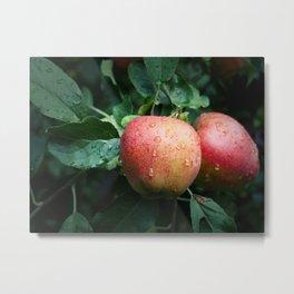 Autumn Apples in the Rain Metal Print